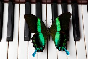 green-and-black-butterfly-on-piano-keys-garry-gay
